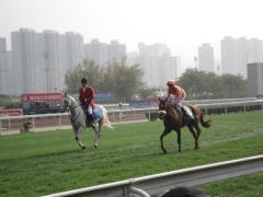 horserace18
