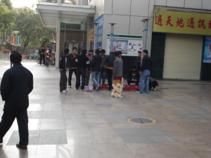 yuanxiao15
