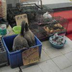 「四足のものは机以外何でも」という広東省食文化