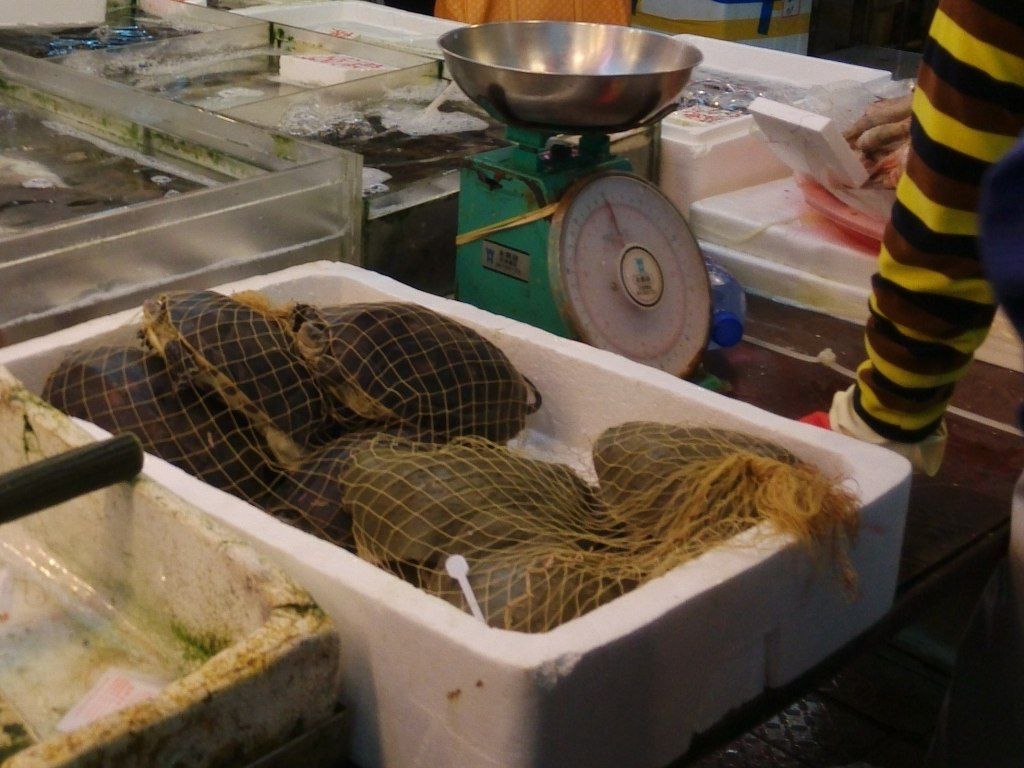 shangshui-market (21)