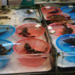 香港上水マーケット Ⅰ 魚市場を歩く