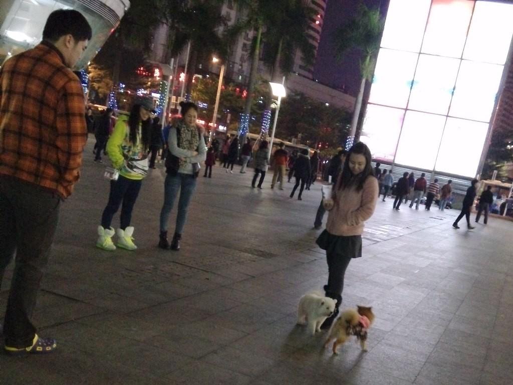 chinese-dog (10)