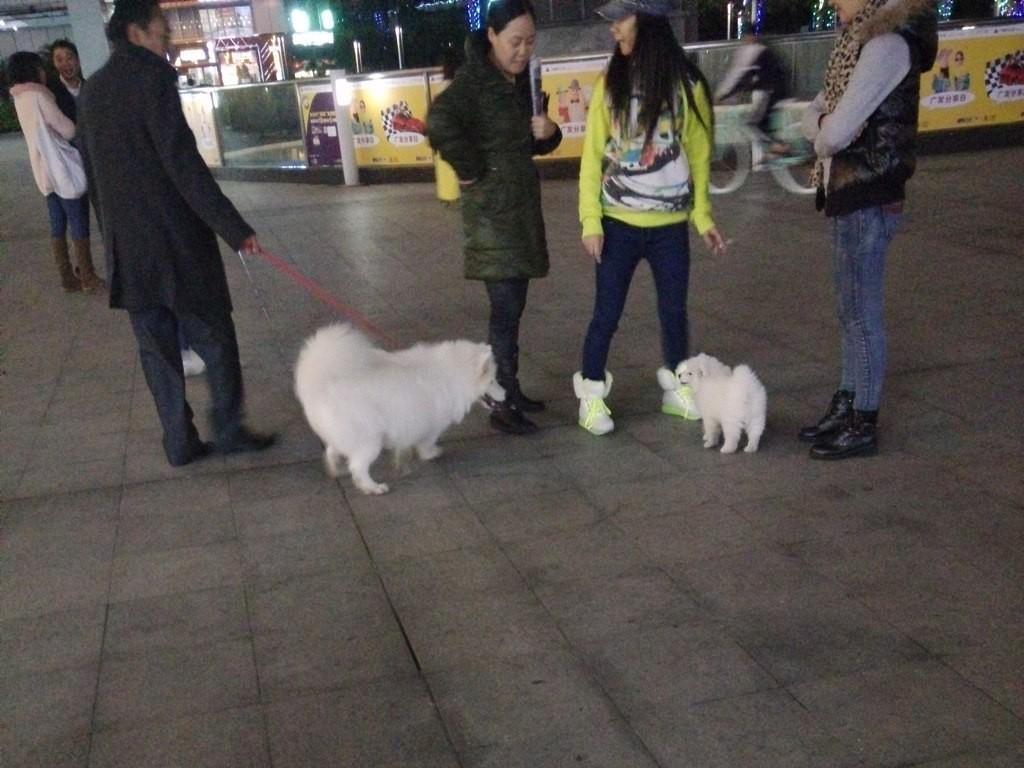 chinese-dog (13)