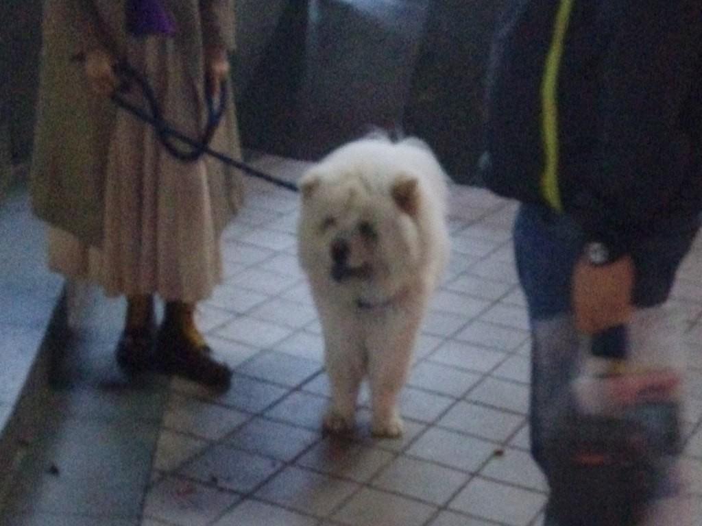 chinese-dog (14)