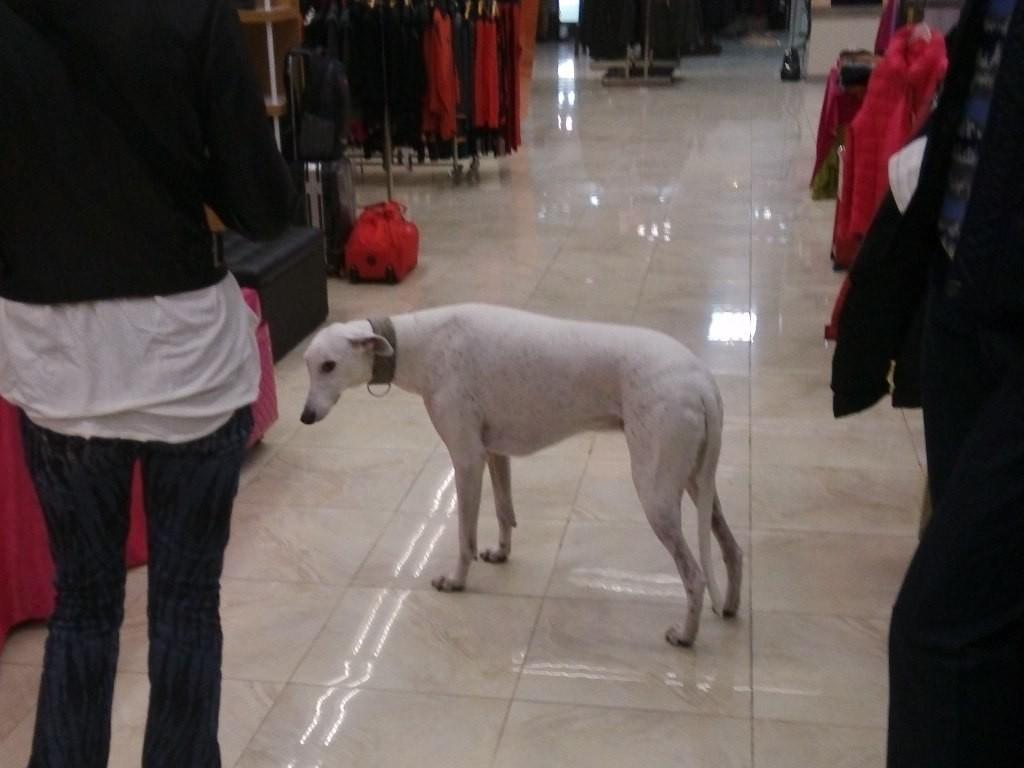 chinese-dog (16)