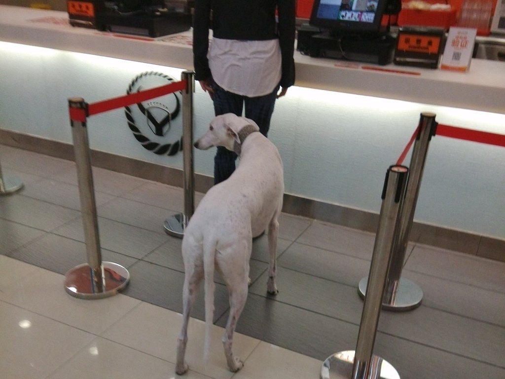 chinese-dog (17)