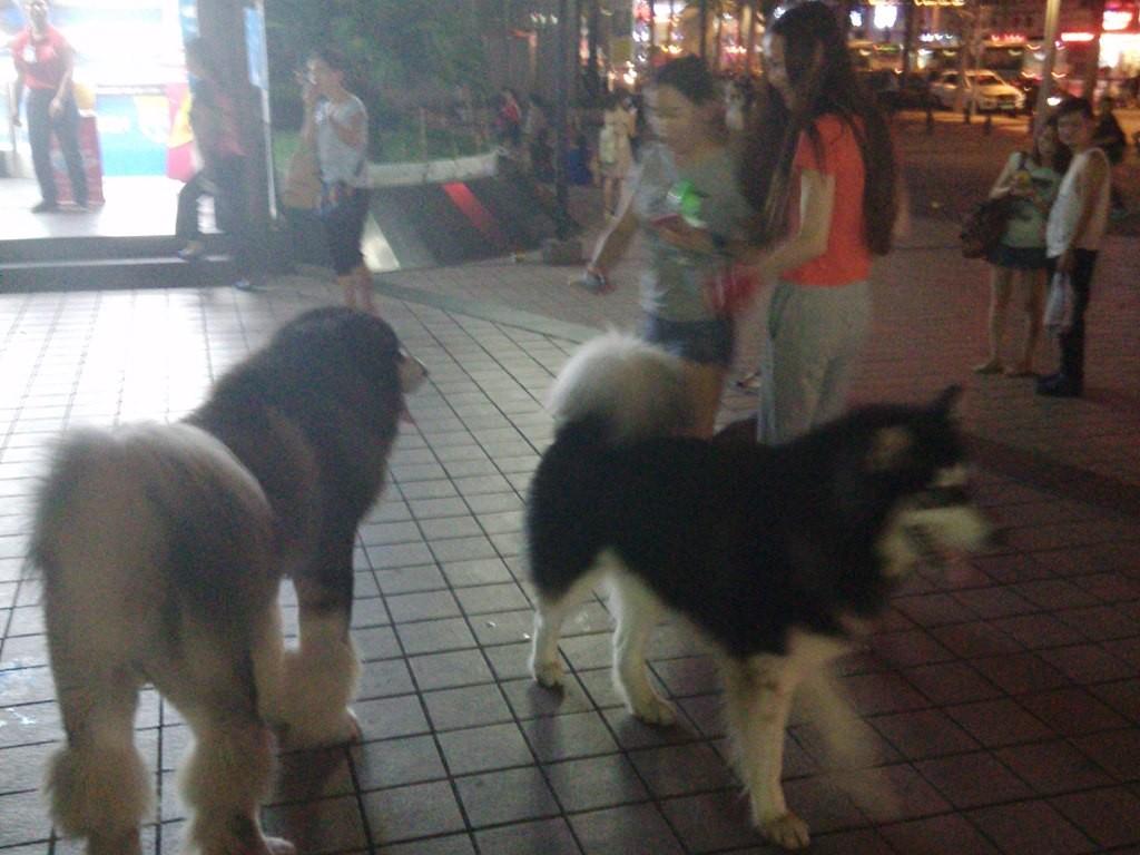 chinese-dog (24)