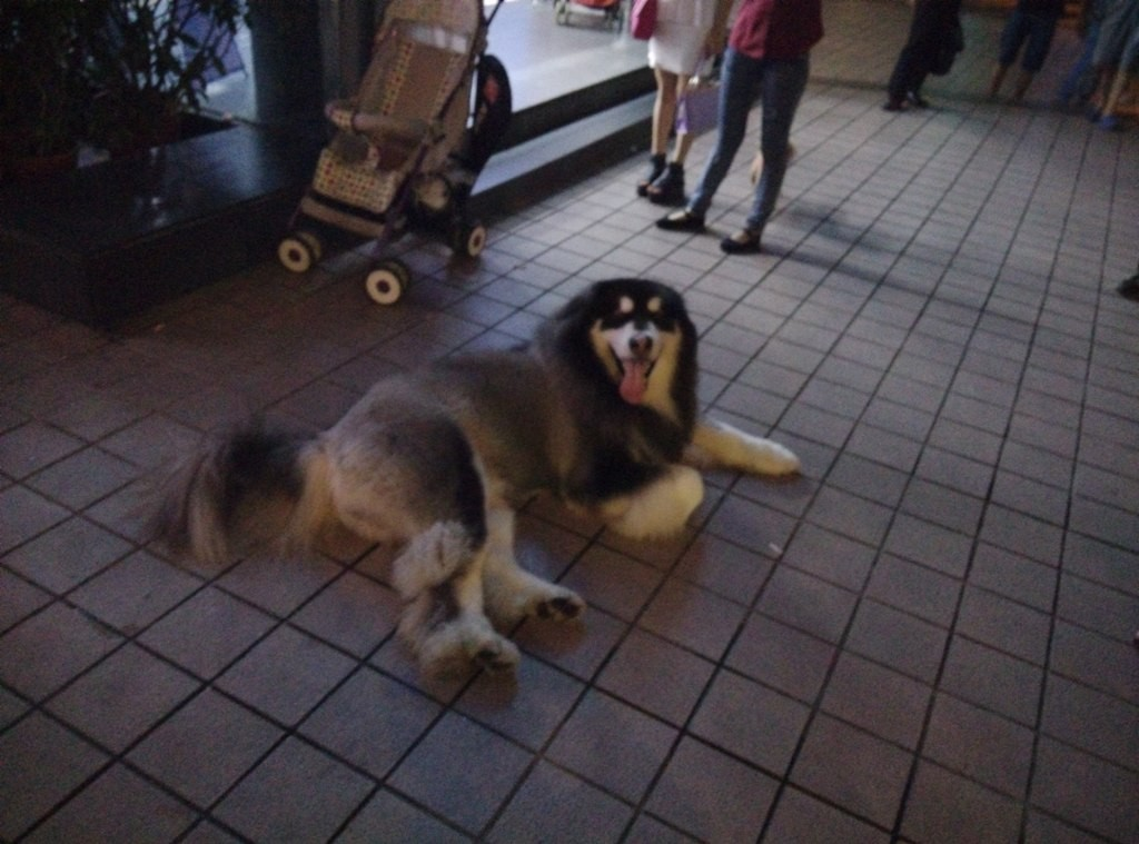 chinese-dog (27)