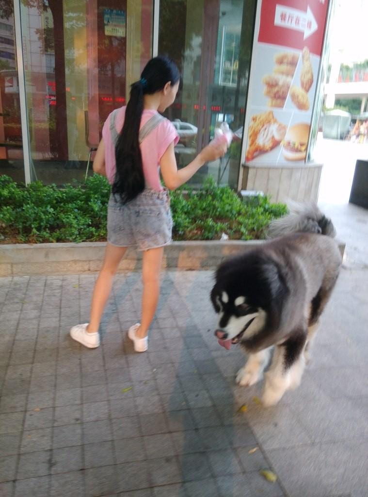 chinese-dog (33)