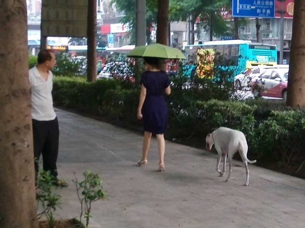 chinese-dog (34)