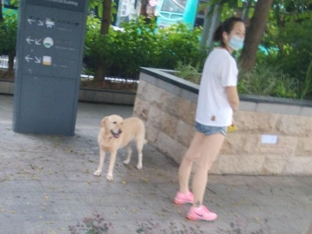 chinese-dog (37)