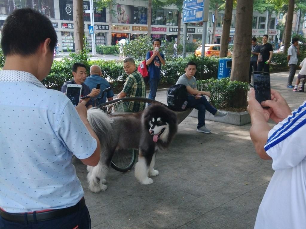 chinese-dog (39)