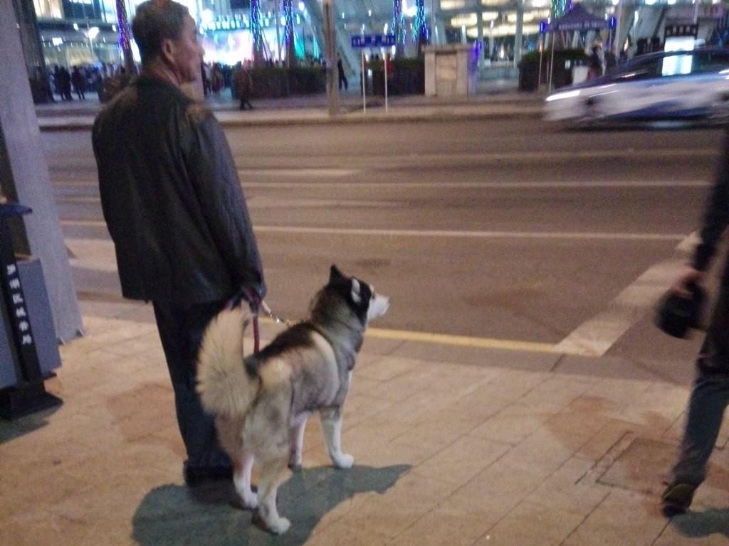 chinese-dog (4)