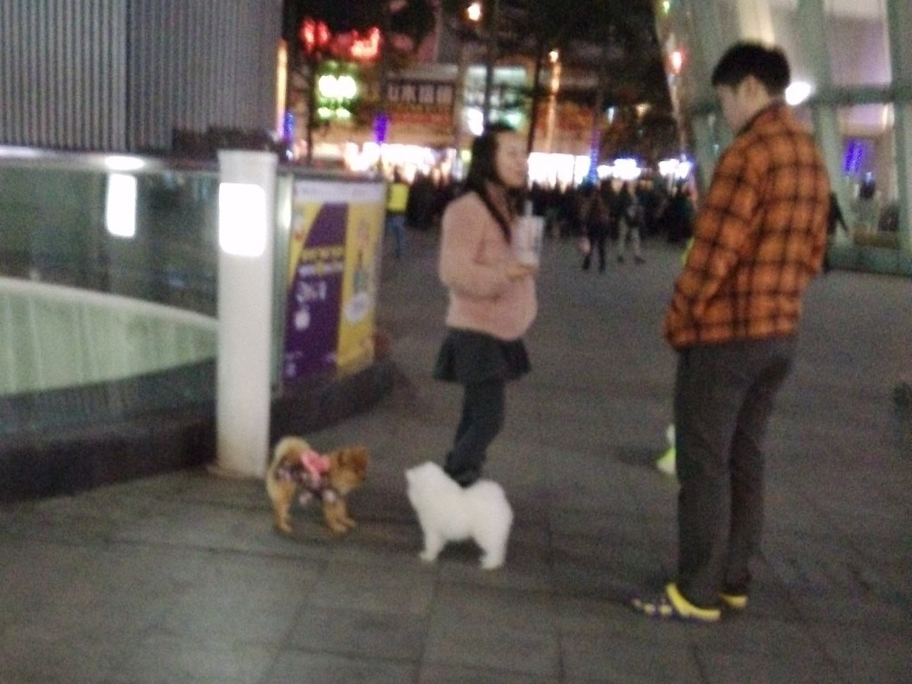 chinese-dog (9)