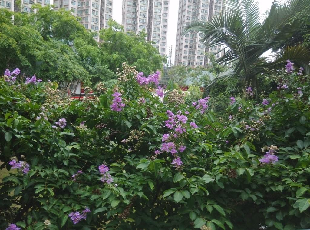 shangshui-market77 (35)