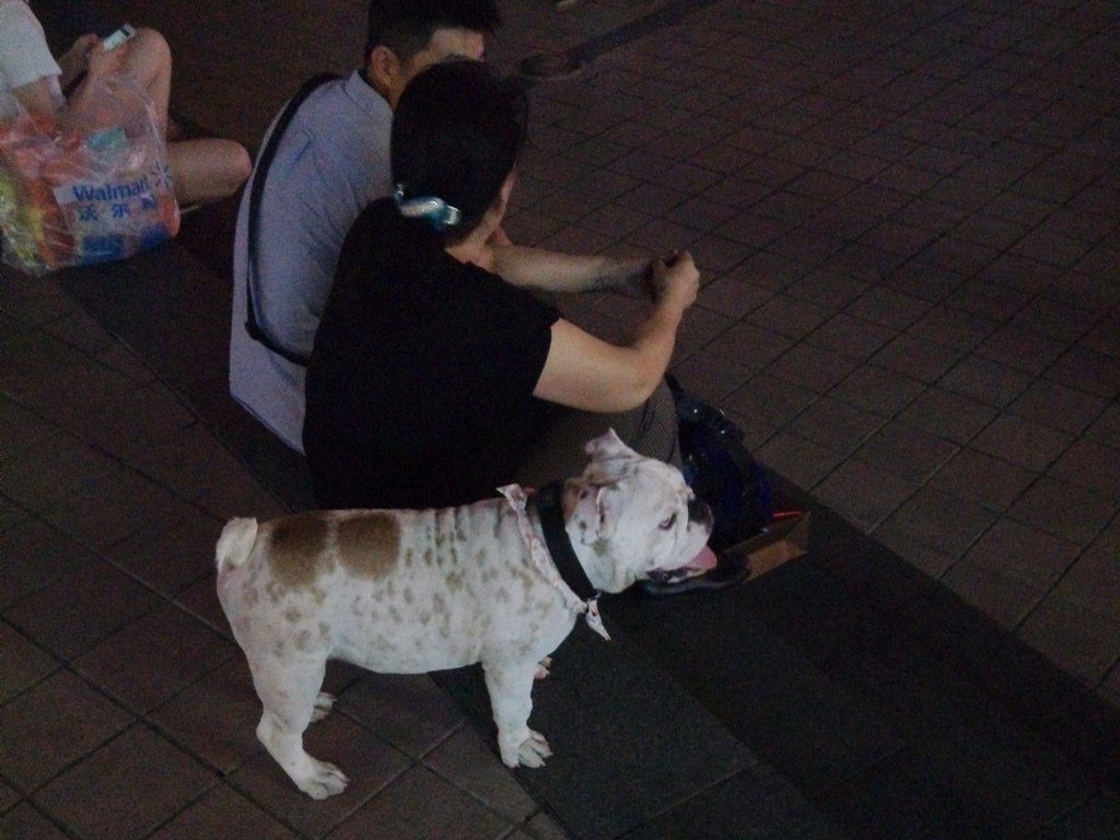 chinese-dog-41