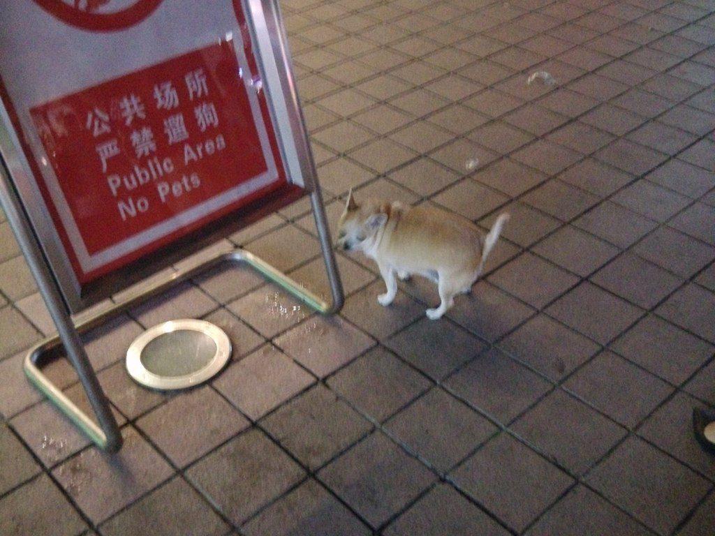 chinese-dog-49