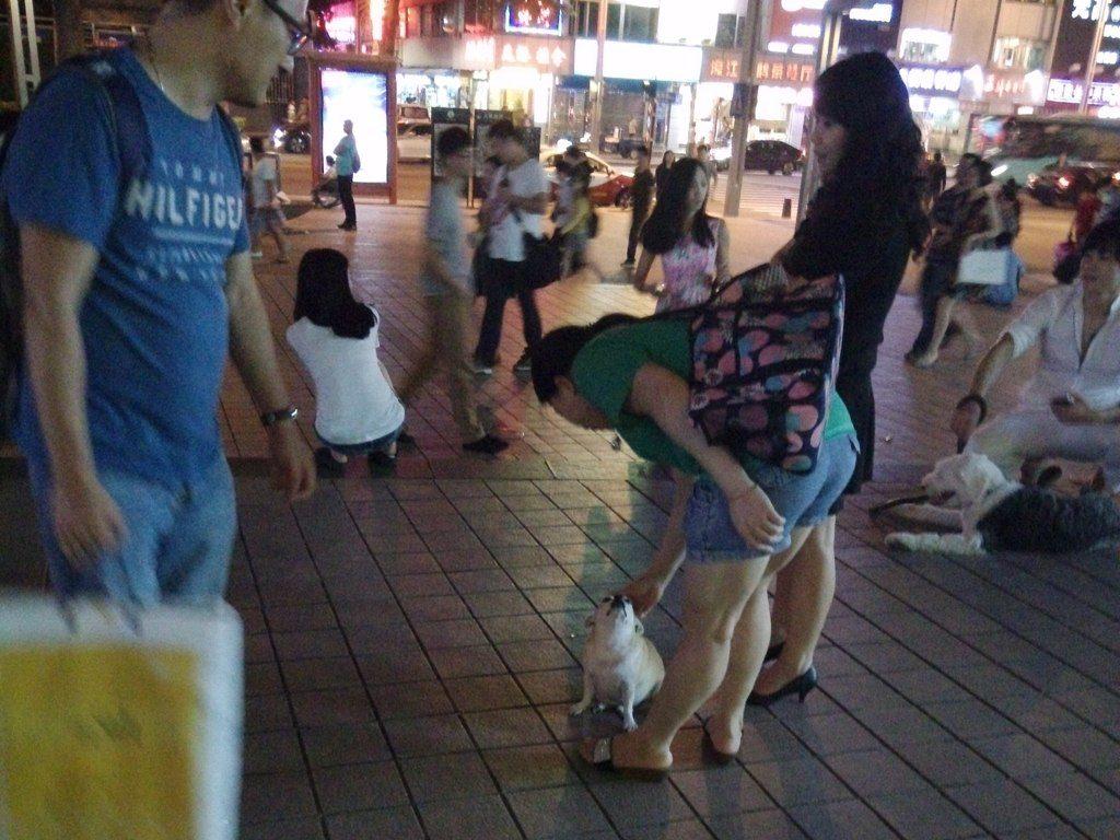 chinese-dog-50